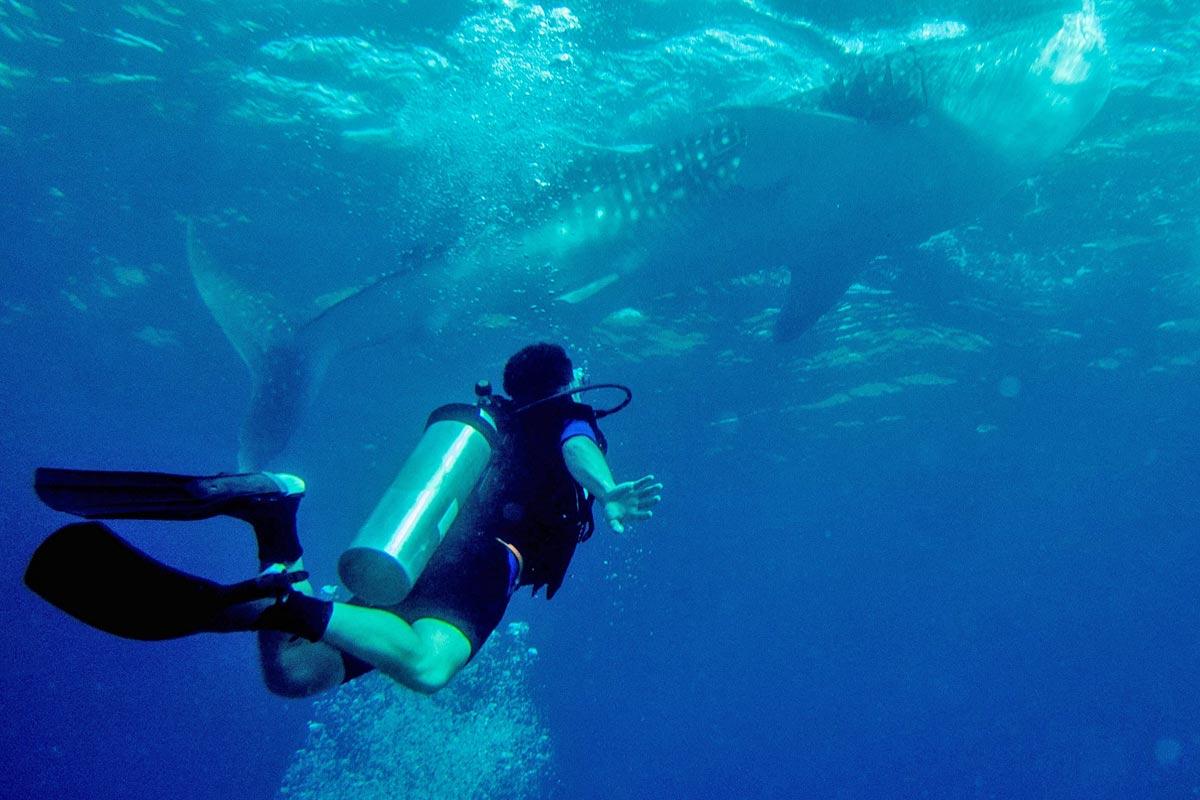 Dykning (Foto: Flickr/adametrnal)